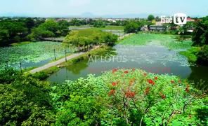 Tinh Tam lake at lotus blooming season