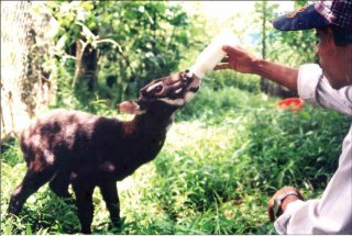 Bach Ma National Park: The first saola breeding center