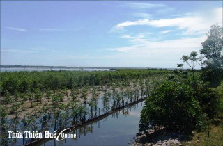 Mangrove forest in preventing floods