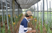 Flowers and vegetables for Tet: Introducing many new varieties