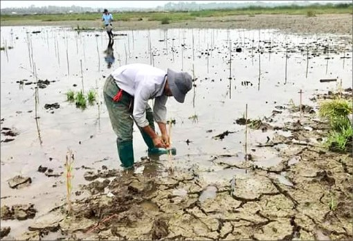 20 hectares of freshwater forest planted in O Lau estuary