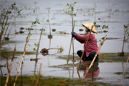 Ecosystem-based adaptation became a storm and flood resilience method in Thua Thien Hue province