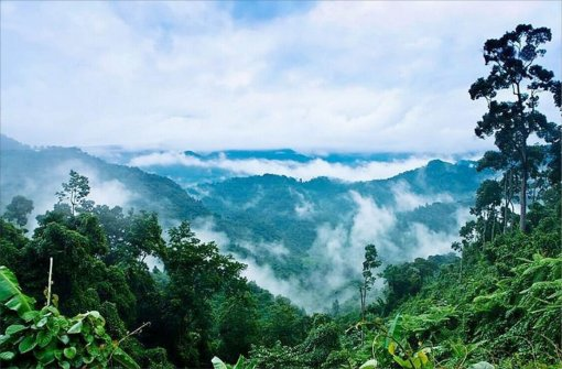 A trekking tour to primeval forests