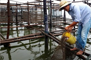 Flood-crossing Caged fish to have a bumper