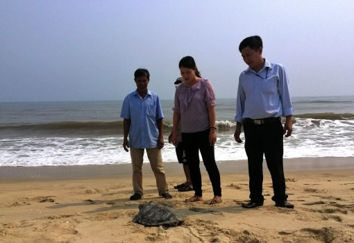 A precious and rare turtle released into marine environment