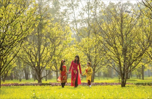 The City of Hoang Mai (yellow apricot blossom)