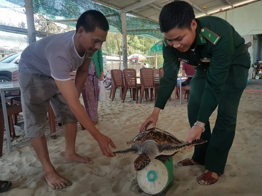 Another rare turtle released into the sea
