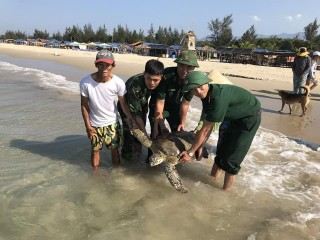 A 33kg Vich sea turtle released into sea