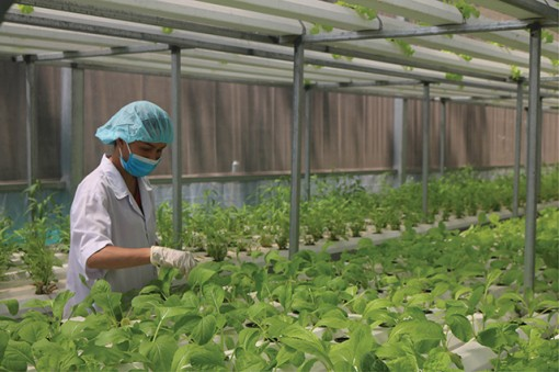 Agricultural development in an adaptive direction in Hue