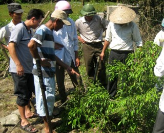 Training the work of cultivation and care of bonsai trees for farmers