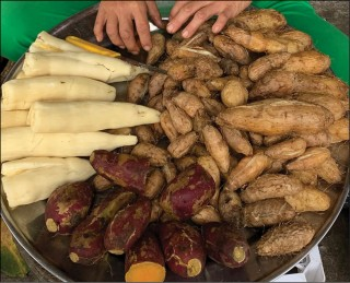 Late season of yam