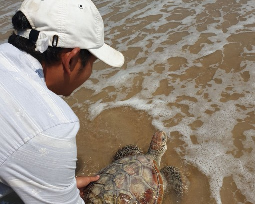 A valuable and rare sea turtle released back to marine environment