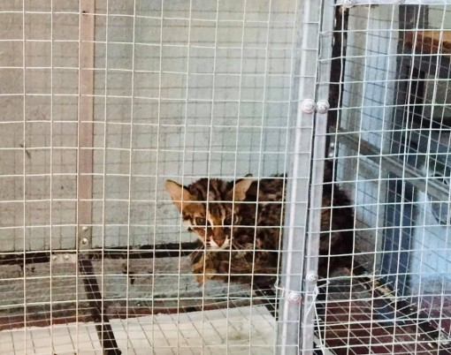 A valuable and rare wild cat released back to the natural environment