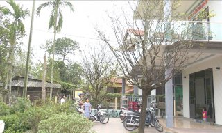 Hue to encourage planting yellow apricot blossom trees in front of offices and residences