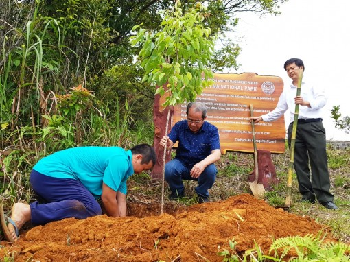 Cherry blossom trees from Da Lat to be grown in Bach Ma National Park